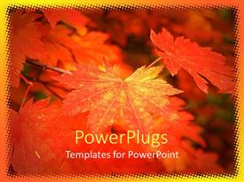 PowerPoint template displaying a number of leaves in the fall