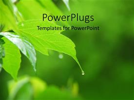 PowerPoint template displaying a number of leaves with greenish background and place for text