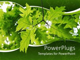 PowerPlugs: PowerPoint template with a number of leaves with their reflection in the  background