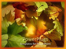 PowerPlugs: PowerPoint template with a number of leaves with sunshine