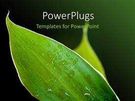 PowerPlugs: PowerPoint template with a number of leaves with water droplets and greenish background