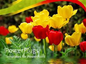 PowerPlugs: PowerPoint template with a number of multicolored flowers with greenish background