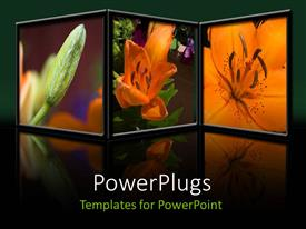 PowerPlugs: PowerPoint template with a number of pictures of flowers