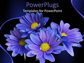 PowerPoint template displaying a number of purple flowers with a black background
