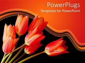 PowerPoint template displaying a number of red tulips with orange background