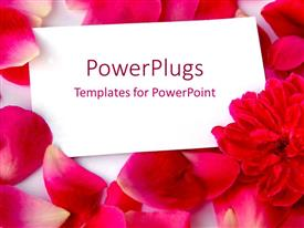 PowerPlugs: PowerPoint template with a number of rose petals with a page