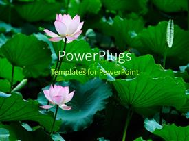 PowerPoint template displaying a number of roses with greenery in the background