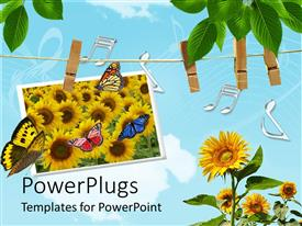 PowerPoint template displaying a number of sunflowers with blue sky in the background