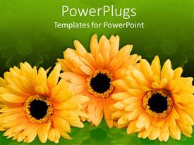 PowerPoint template displaying a number of sunflowers with greenish background