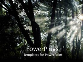 PowerPoint template displaying a number of trees with sunshine