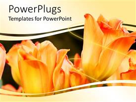 PowerPlugs: PowerPoint template with a number of tulips with greenish background