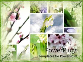PowerPlugs: PowerPoint template with a number of various flowers in boxes