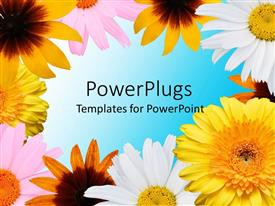 PowerPoint template displaying a number of various kinds of flowers