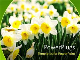 PowerPlugs: PowerPoint template with a number of white flowers with a lot of flowers in the background