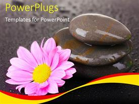 PowerPlugs: PowerPoint template with a number of zen stones with a flower