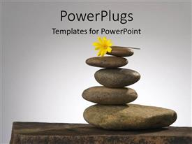 PowerPoint template displaying a number of zen stones witha  flower and grey background
