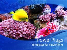 PowerPlugs: PowerPoint template with an ocean with fish and plants in it showing sea life