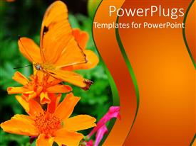 PowerPlugs: PowerPoint template with orange colored butterfly perching on an orange colored flower