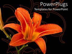 PowerPoint template displaying orange lily flower on abstract design and dark background