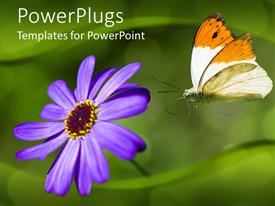 PowerPlugs: PowerPoint template with orange and white butterfly landing on purple flower