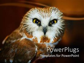 PowerPlugs: PowerPoint template with owl watching directly into focus on faded dark brown background