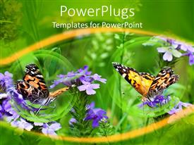 PowerPlugs: PowerPoint template with a pair of butterflies along with a beautiful floral background