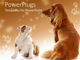 PowerPoint template displaying a pair of dogs with footprints in the background