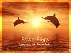 PowerPoint template displaying a pair of dolphins with sun in the background