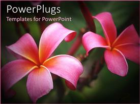 PowerPlugs: PowerPoint template with a pair f beautiful flowers with greenish background and place for text