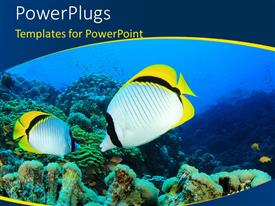 PowerPlugs: PowerPoint template with pair of Lined Butterfly fish on reef with curves in the foreground
