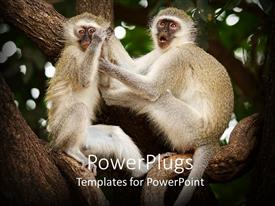 PowerPoint template displaying a pair of monkeys on a tree