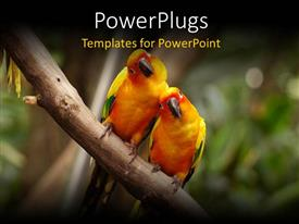 PowerPlugs: PowerPoint template with a pair of parrots with blurred background