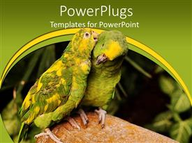 PowerPoint template displaying a pair of parrots with green background
