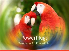 PowerPoint template displaying a pair of parrots with greenery in the background