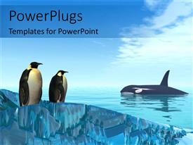 PowerPlugs: PowerPoint template with a pair of penguins together with shark in the background