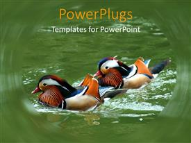 PowerPlugs: PowerPoint template with a pair of wood ducks enjoying in the lake
