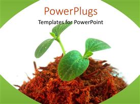 PowerPlugs: PowerPoint template with a palnt with white background and place for text