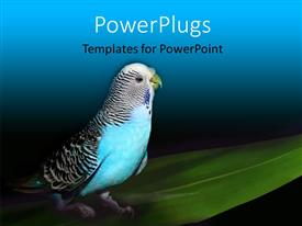 PowerPlugs: PowerPoint template with parrot sitting on a green leaf with black and blue color