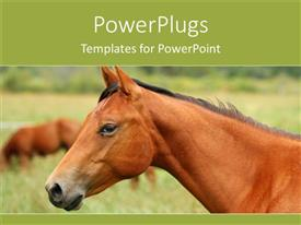 PowerPoint template displaying partial view of an adult brown colored horse on a grass field