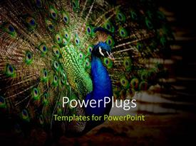 PowerPlugs: PowerPoint template with a peacock with its wings open and place for text