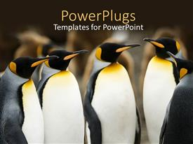 PowerPlugs: PowerPoint template with pelicans converge together over blurry background