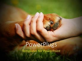 PowerPlugs: PowerPoint template with a person holding the dog's paw in his hand