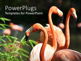 PowerPlugs: PowerPoint template with pink flamingos with green plant in the sun