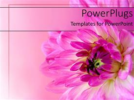 PowerPlugs: PowerPoint template with a pink flower blossoming with its reflection in the background