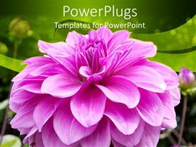 PowerPoint template displaying a pink flower with green background