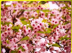 PowerPlugs: PowerPoint template with pink flowers on blossoming apple tree with green leaves