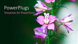 Colorful slide deck having a number of colorful flowers with greenish background