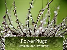 PowerPlugs: PowerPoint template with a plant with dew drops and a greenery in the background