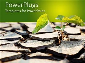 PowerPlugs: PowerPoint template with a plant growing up during a drought with greenish background