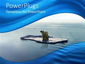 PowerPlugs: PowerPoint template with polar bear on ice piece floating on the water of Arctic sea